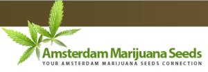 AmsterdamMarijuanaSeeds-300x104