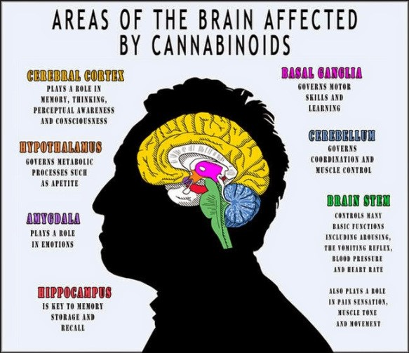 effects-of-cbd-to-the-brain