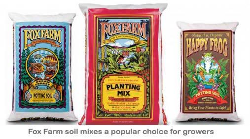 marijuana-fertilizer
