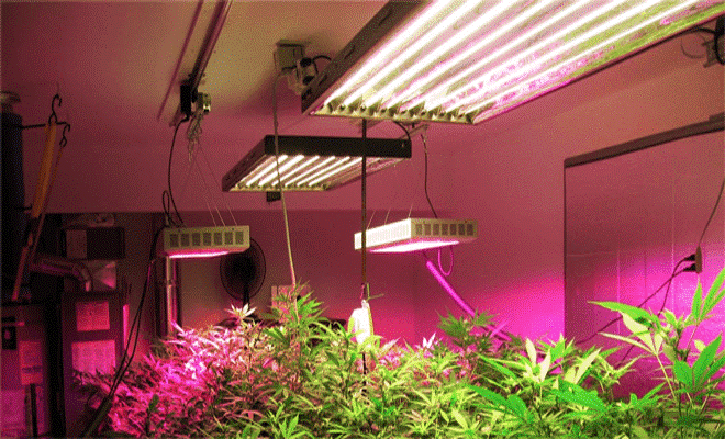 marijuana-grow-lights