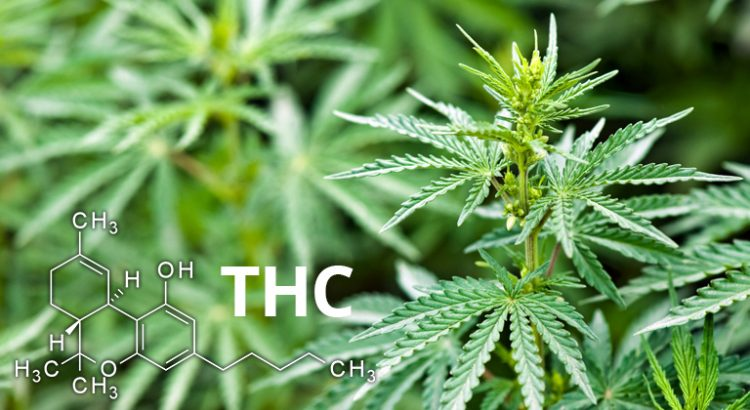 how to tell the thc content in weed home