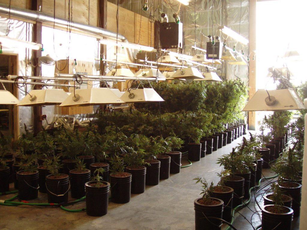 Grow Room Setup and Design for Marijuana - Marijuana Seeds Center